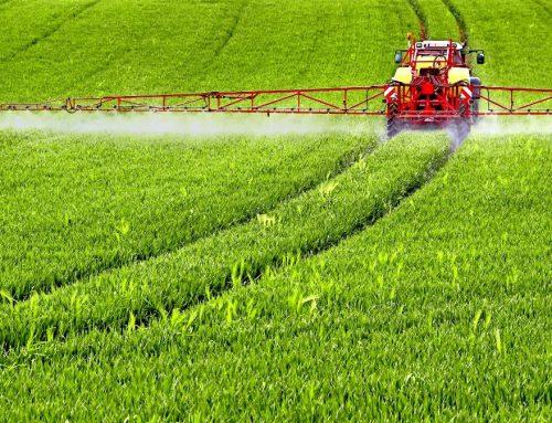 Diese Chemikalie in Mais, Weizen, Hafer und Soja ist SCHÄDLICHER als Gluten